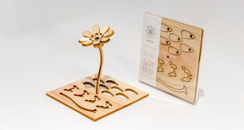 植物模型 コスモス