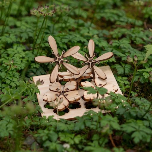 植物模型 シコクバイカオウレン